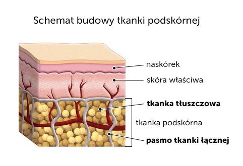 Tkanka podskórna-przekrój poprzeczny