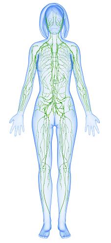 Układ limfatyczny.System naczyń chłonnych