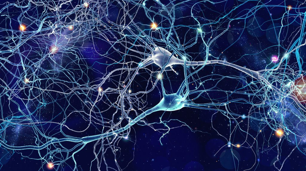 Neurony w ciele człowieka